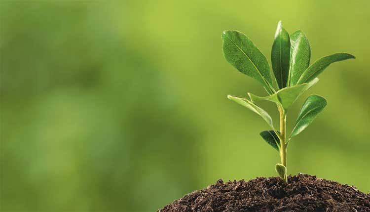 Растения как индикатор в поисках воды для рытья колодца на участке