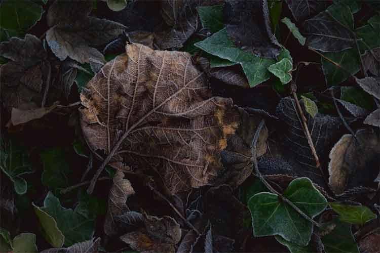 Листья. Во время листопада можно создать богатый гербарий невиданной красоты. Высушенные листья используются в качестве основы для небольшой композиции или как элемент отделки и декора.