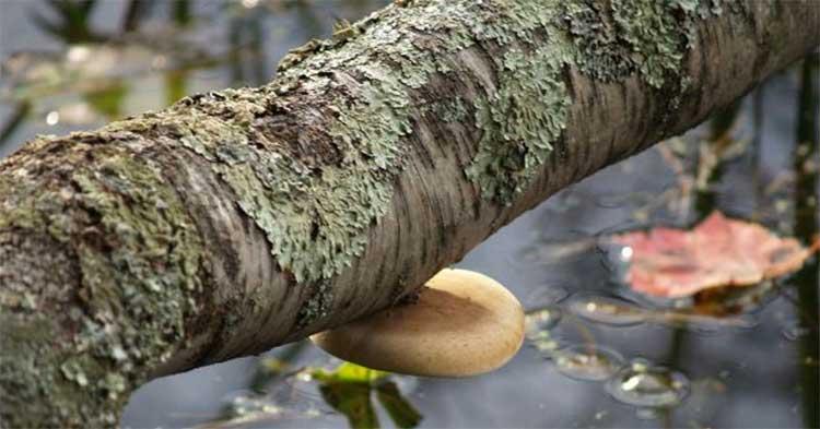 Сруб любого колодца формируется из дерева